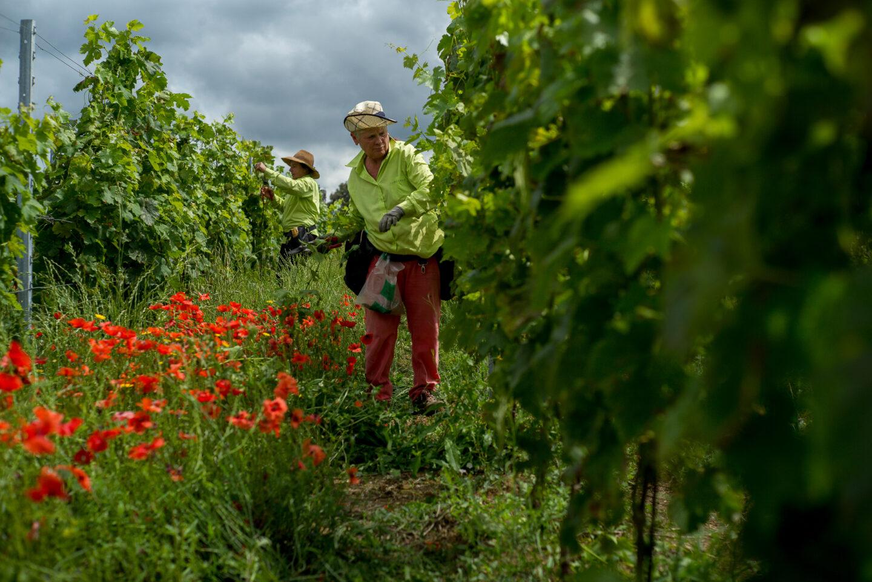 le macchiole wein wine gentlemens journey weinkaufsliste
